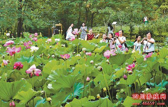 广元市南河湿地公园我国西部规模最大的开放性城市湿地公园