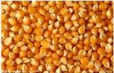 求购玉米碎米大豆高粱