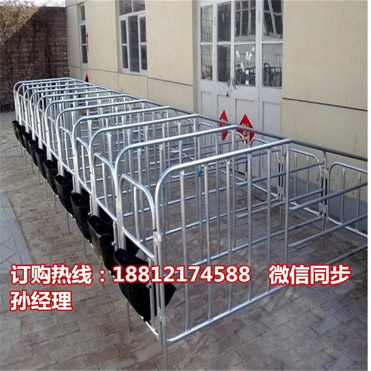 一组十个猪位的限位栏多少钱 价格实惠的定位栏专业生产销售