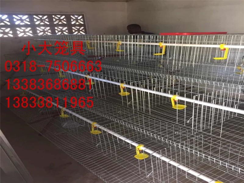 鸡鸽兔笼狐狸笼宠物笼运输笼鹌鹑笼鸟笼狗笼鸽子笼兔子笼养殖笼具