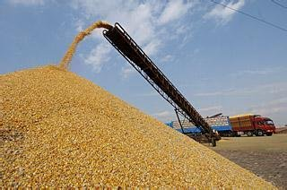 大型养殖场常年求购玉米大豆青饼豆饼豆粕等各种饼粕类