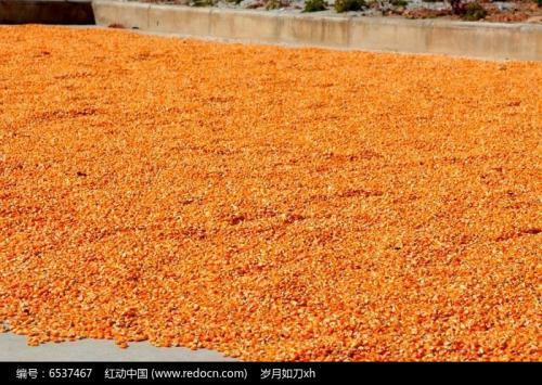 汉江养殖单位长期求购玉米高粱黄豆荞麦等