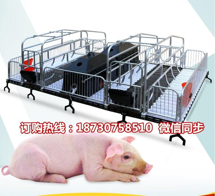 湖北养猪设备生产厂家 母猪产仔栏尺寸  猪用分娩栏价格