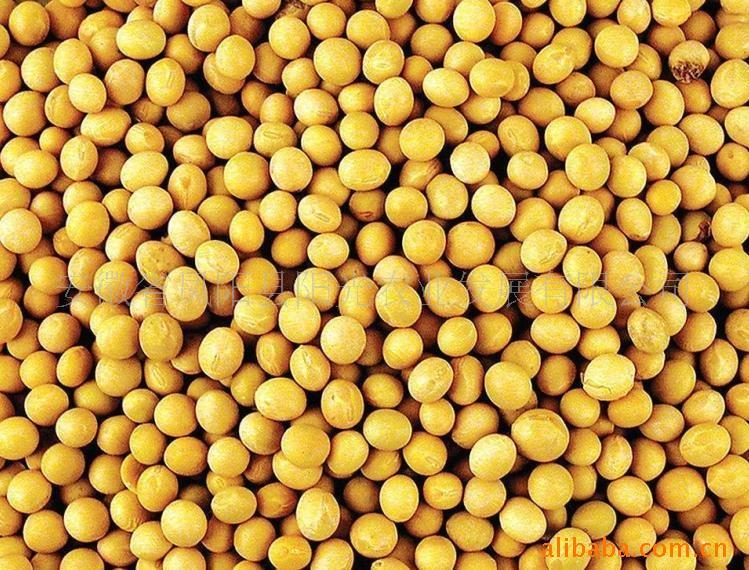汉江水产养殖场常年求购玉米大豆青饼黄饼豆饼豆粕等各种饼粕类