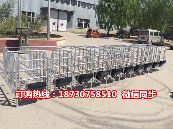 带食槽的限位栏一组多少钱 十个猪位一组的定位栏厂家直销