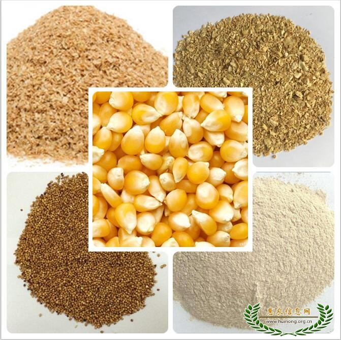 现款收购玉米