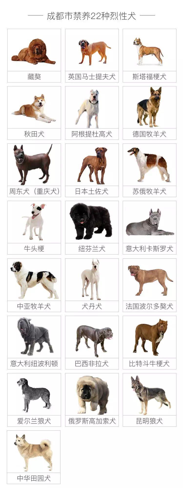 11月16日起四川省成都市禁养22种烈性、大型犬