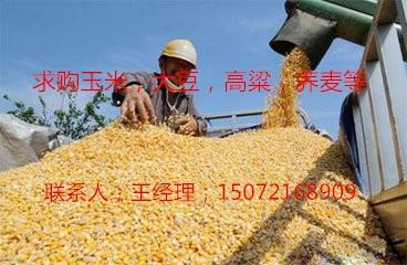 饲料厂收购玉米大豆高粱油糠菜粕等
