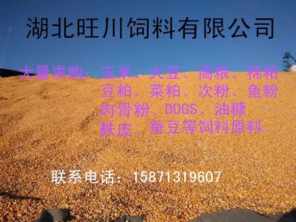 湖北饲料厂现款求购玉米棉粕高粱大豆