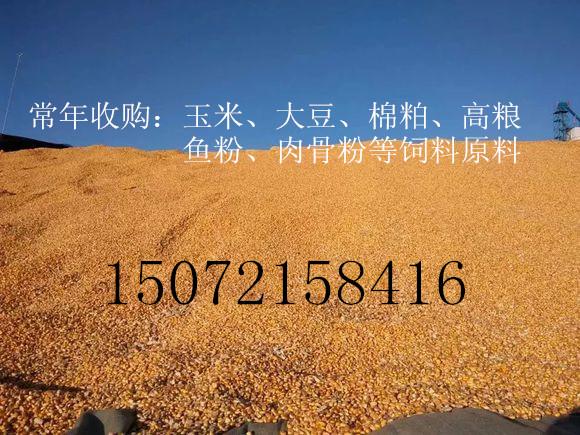 旺川饲料高价求购玉米棉粕高粱