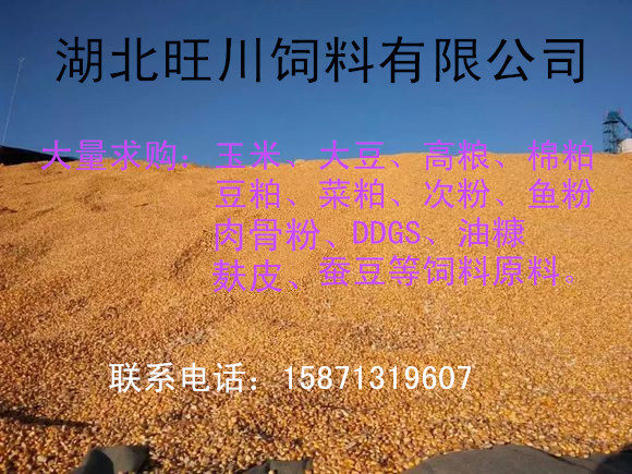 求购玉米高粱鱼粉棉粕