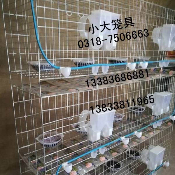 狐狸笼鹌鹑笼鹧鸪笼兔子笼鸽子笼鸡笼子运输笼宠物笼鸽笼子兔笼子