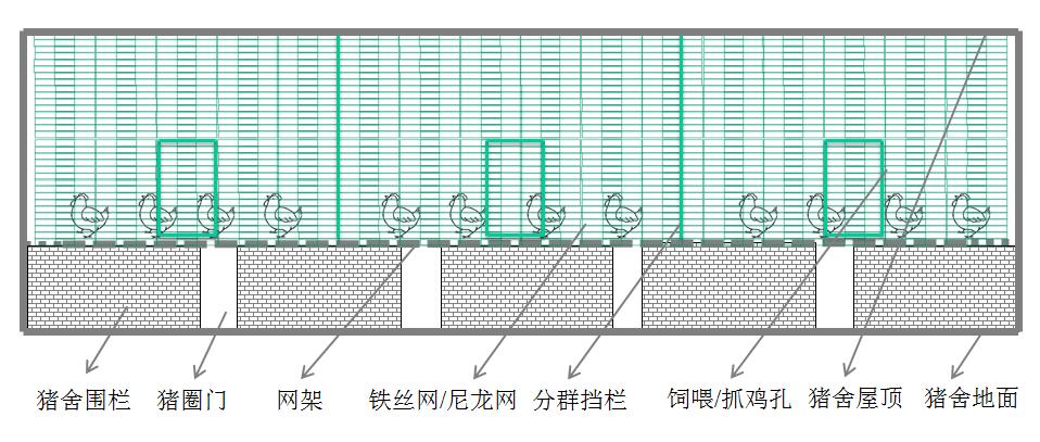 图2 猪舍养鸡网上平养横向剖面示意图