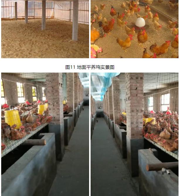 农户猪舍养鸡技术指导手册