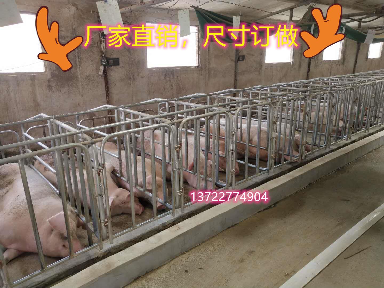 四川自贡母猪定位栏 尺寸厂家订做