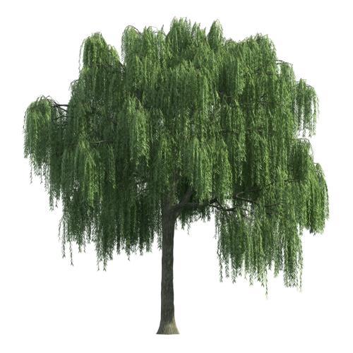 四川省一级古树和名木名录