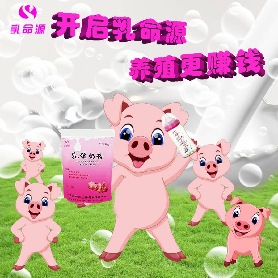 乳命源温馨提示养猪饲养应改变观念对断奶乳猪可使用乳猪奶粉